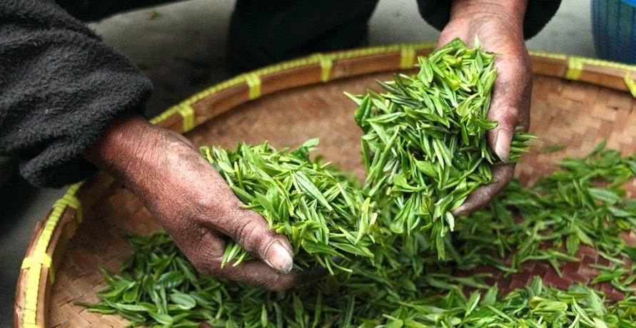 ALDI macht sich stark für nachhaltigen Teeanbau