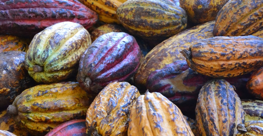Ritter Sport Schokolade bald aus 100% nachhaltigem Kakao