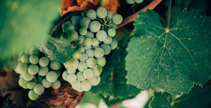 Eintöniges Bio-Wein-Angebot?