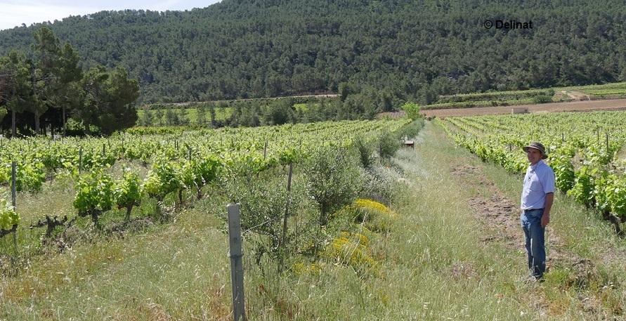 Die Delinat-Methode: Biodiversität, Wein-Abo und nachhaltige Produktion