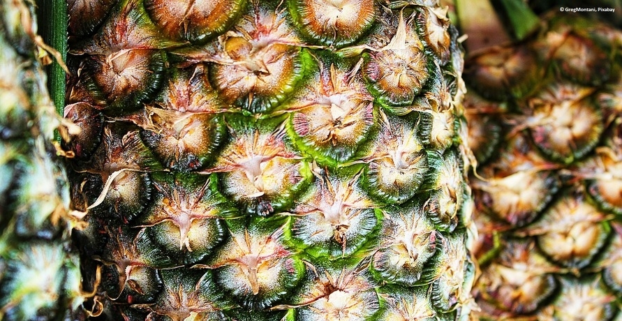 Grüne Mode aus Ananasfasern