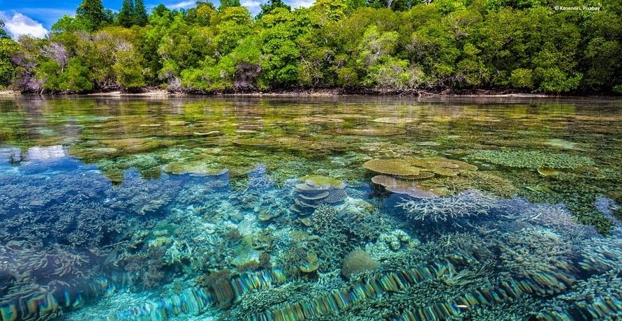 Leonardo Di Caprio baut Öko-Ressort vor Belize