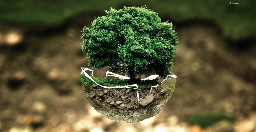 Umweltschutz und Nachhaltigkeit in Haus und Garten