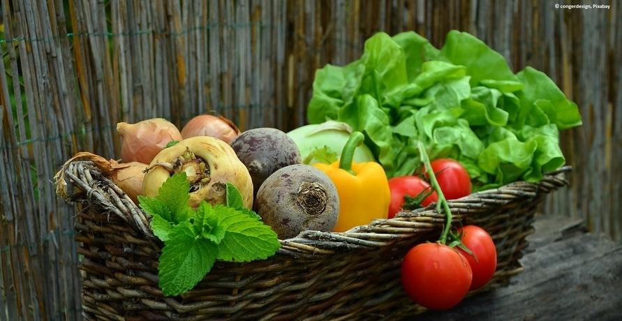 Foodsharing wird immer beliebter