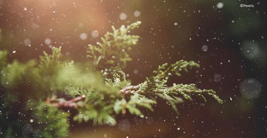 Nachhaltige Weihnachtsbäume fürs Fest