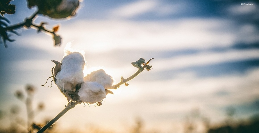 Textilien aus Biobaumwolle