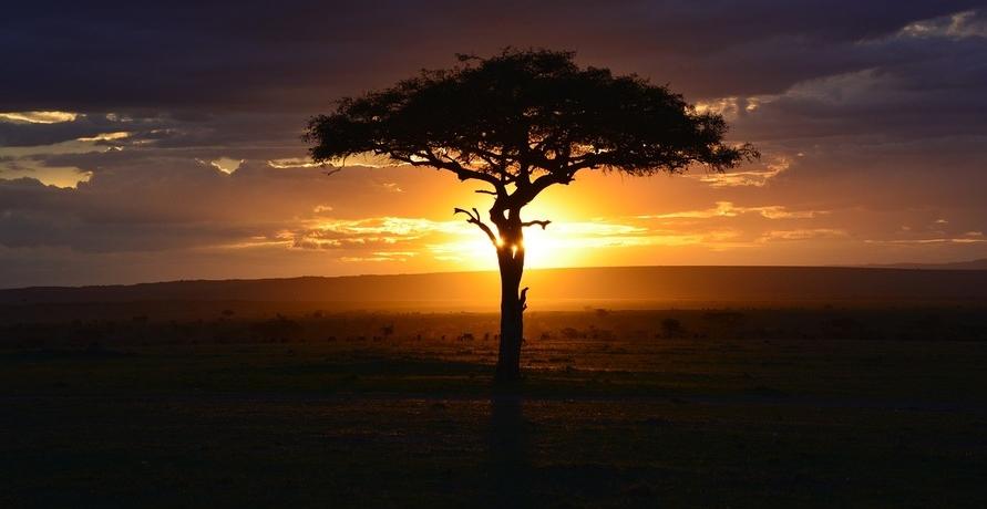 ELEWA: Pflegeprodukte aus afrikanischen Ölen