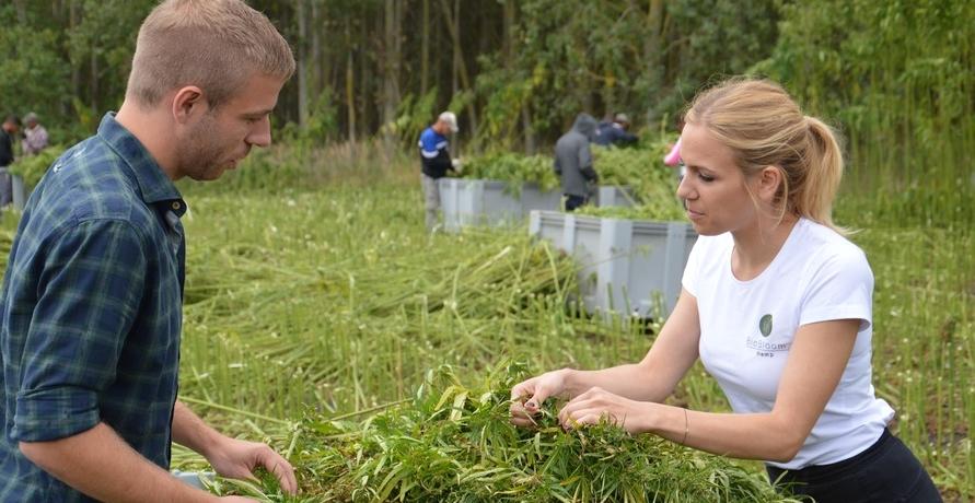Bio Hanf von den BioBloom Feldern