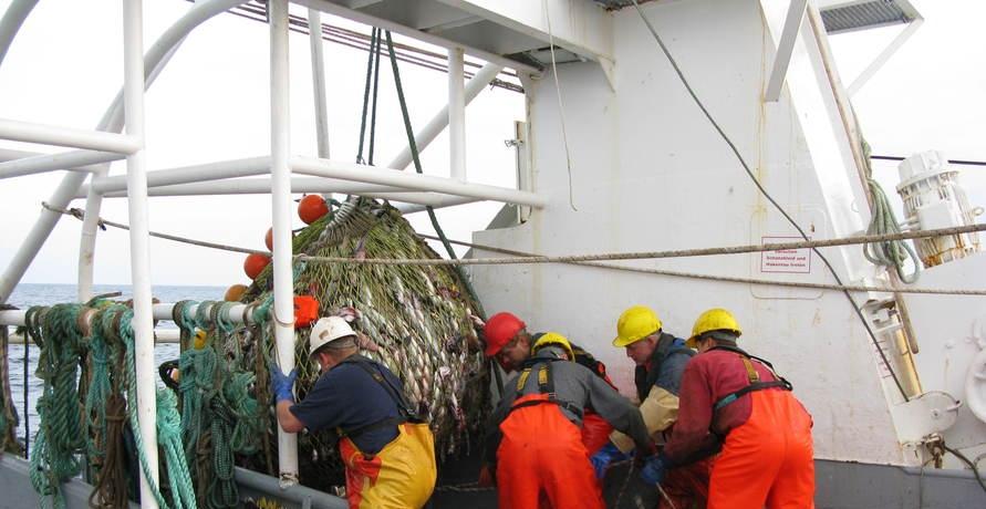 Nachhaltiger Fischfang: Das MSC-Zertifizierungsprogramm für Fischereien und Unternehmen