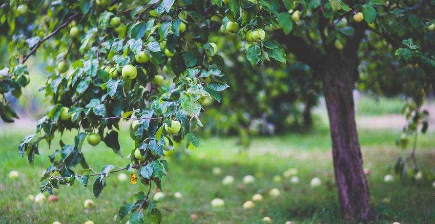 Bio-Saatgut für alle Hobbygärtner