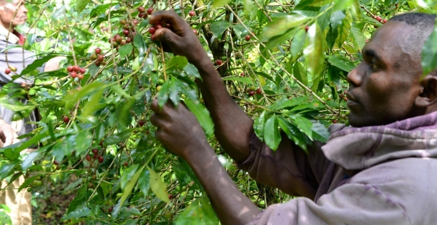 Terra Kahwa: Social Entrepreneurship mit Kaffeegenuss