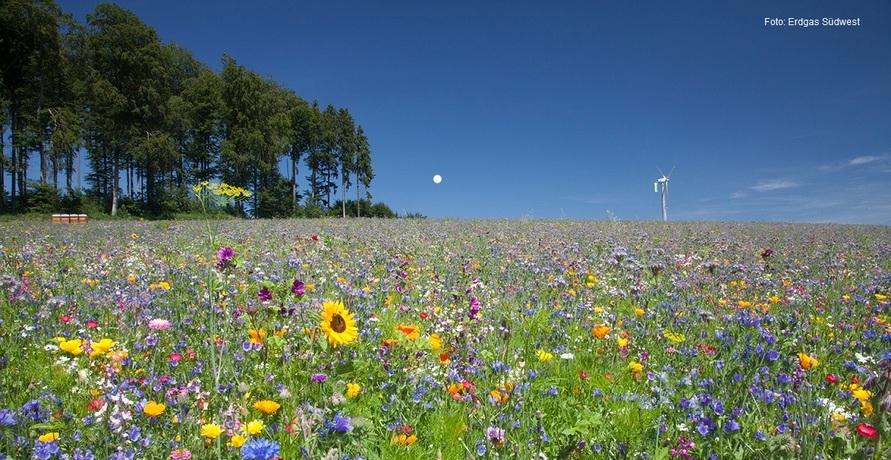 Schritt für Schritt zu den erneuerbaren Energien - Erdgas Südwest gestaltet die Energiewende aktiv mit