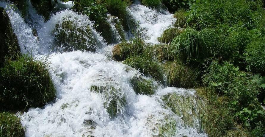 Lebendige Bio-Wasserquelle für zuhause