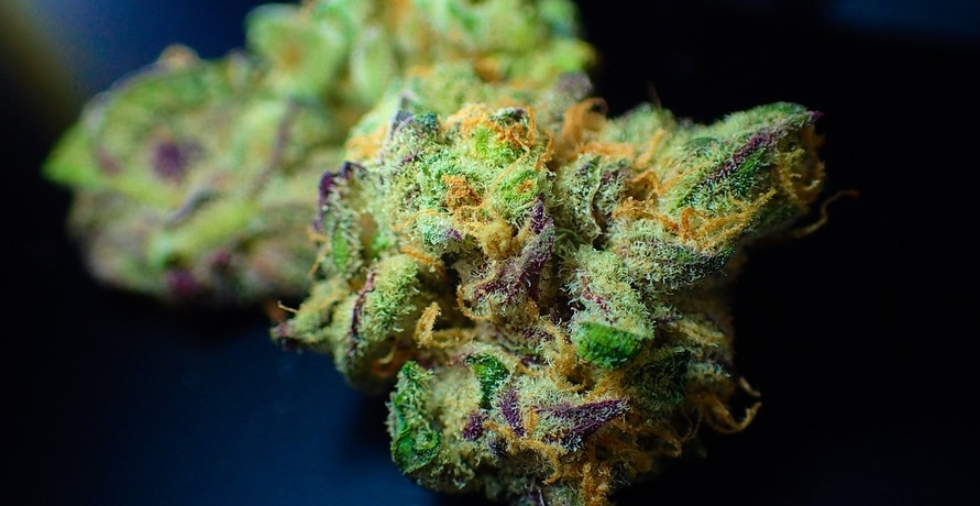 Grünes Licht für Hanf - 3 innovative Cannabis-Startups