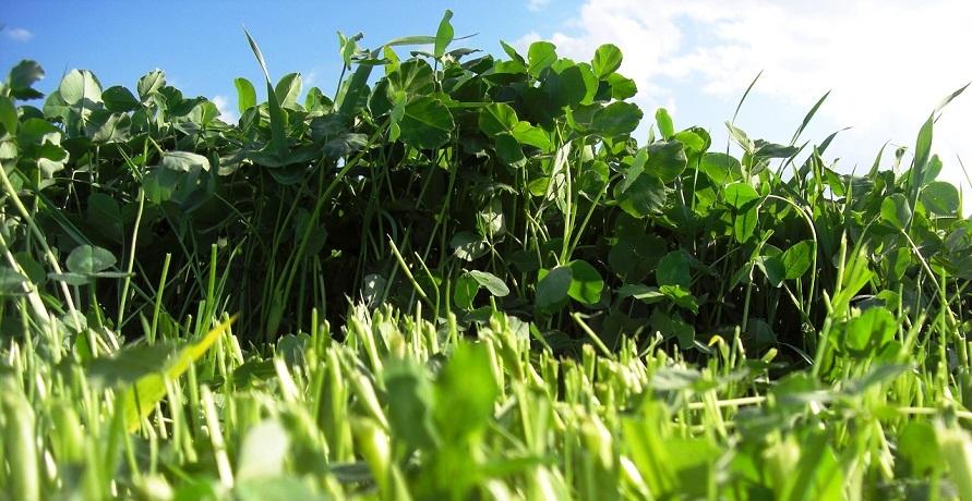 So bleibt der grüne Daumen grün: Dünger aus 100% Bio-Rohstoffen