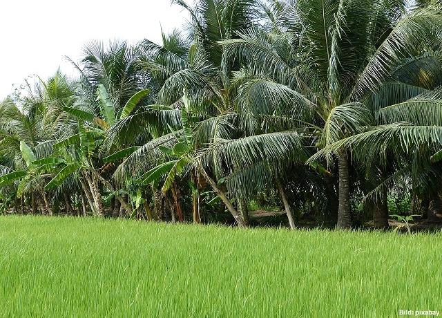 Palmöl - deshalb schadet der Rohstoff unserer Umwelt und so umgehst du ihn