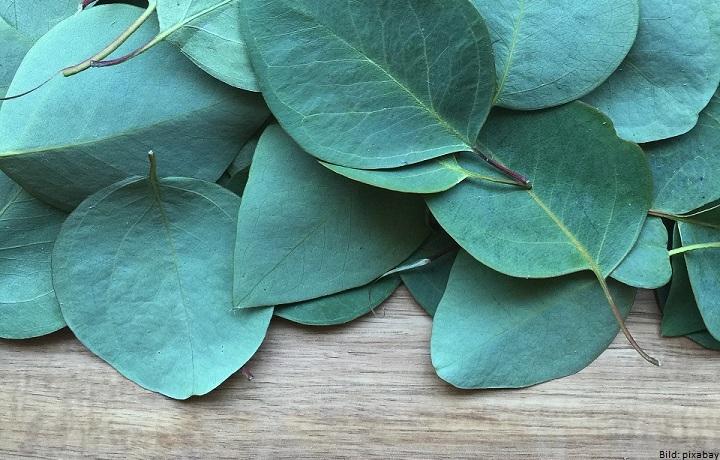 Mode aus Eukalyptus - TENCEL™ als nachhaltige Alternative zur Baumwolle
