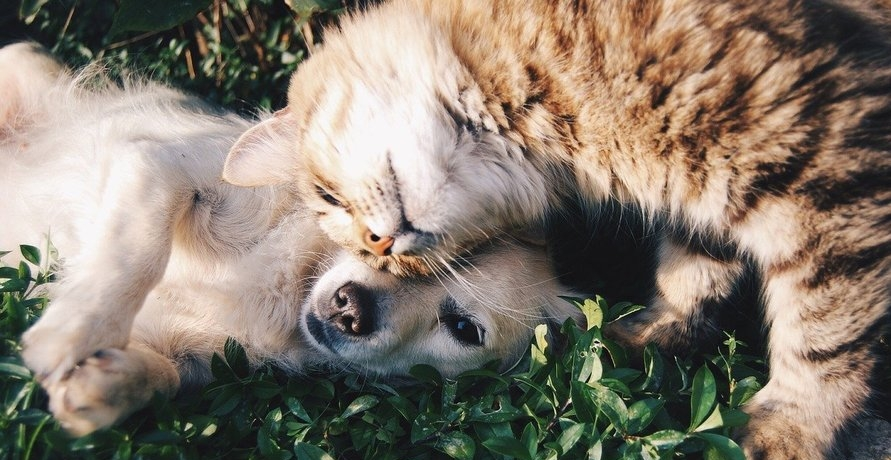 Bio Tierkost – Gesundheit und Genuss für dein Haustier