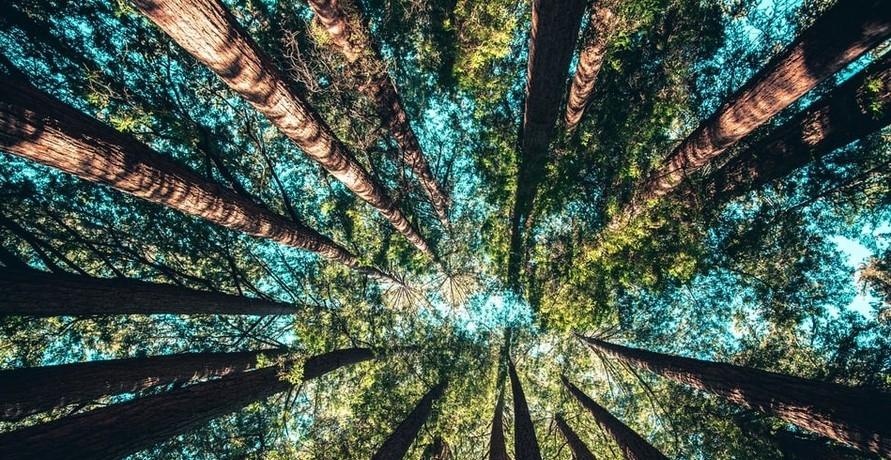 Transparente Beratung für nachhaltige Investments