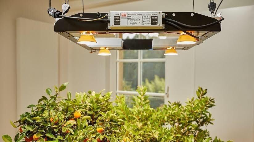 Pflanzenlampen für optimales Pflanzenwachstum mit wenig Energie