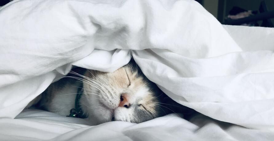 Dein Weg zurück zu erholsamen Schlaf