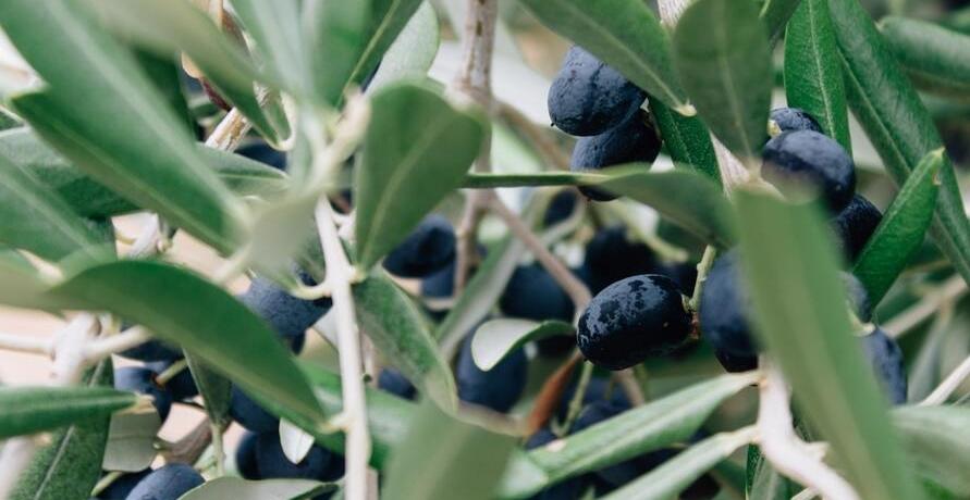 Schmackhafte, hochwertige Bio-Olivenöle – ein absolutes Must-Have in jeder Küche