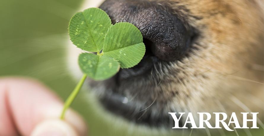 Nachhaltigkeit für dein Haustier