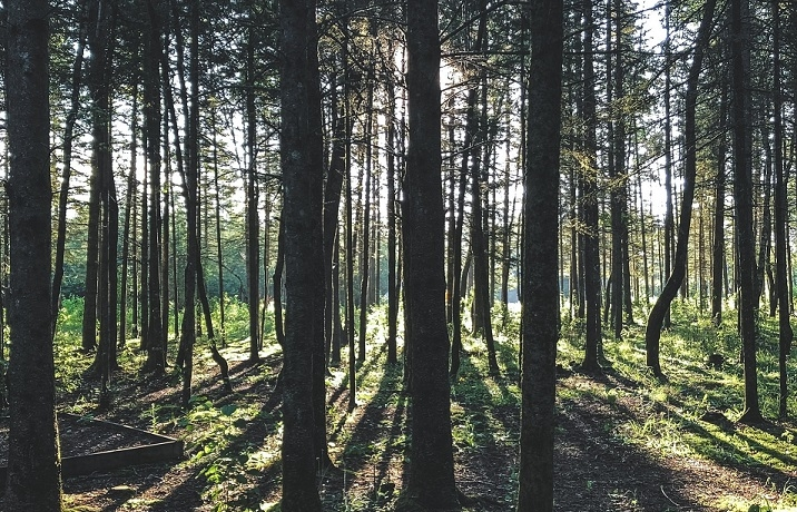 Starke Bäume geben starke Balken – Timberland-Investments bleiben stabil