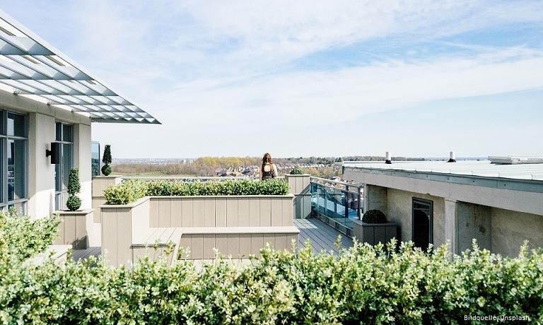Grüne Dächer braucht die Stadt
