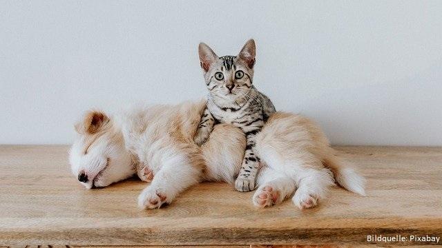 Nachhaltiges Hunde- und Katzenfutter