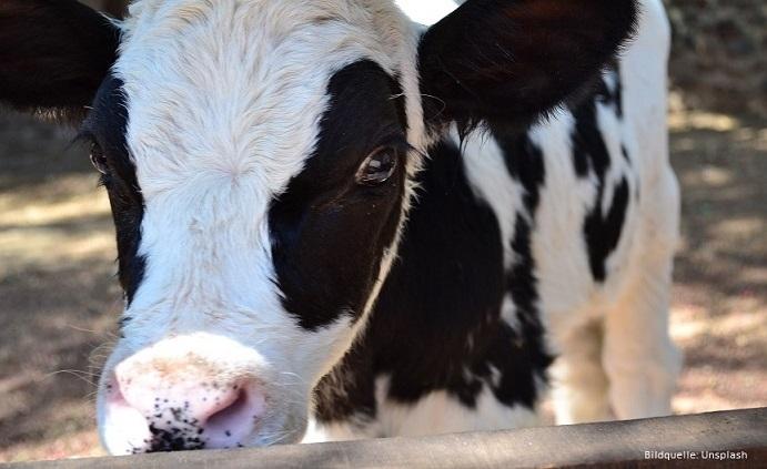 Was uns bewegt im Juli: Lass die Kuh in Ruh'