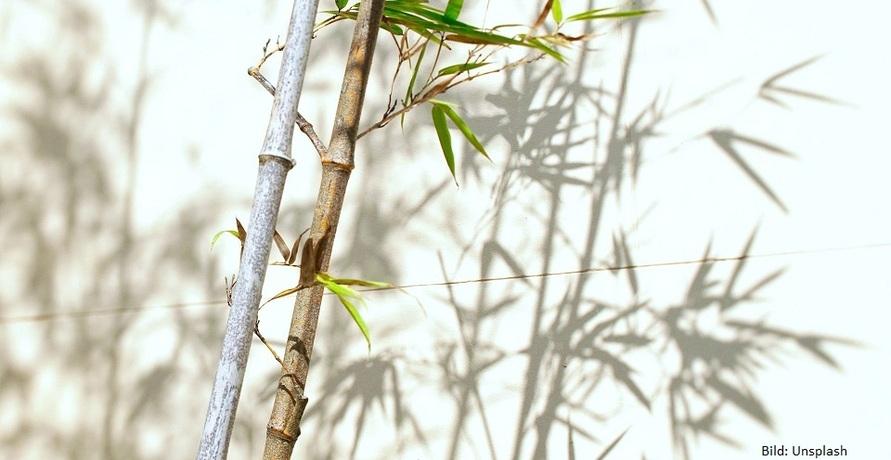Baum oder Bambus – Der Rohstoff der Zukunft