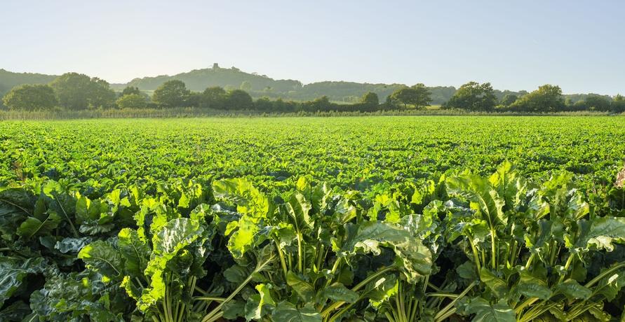 """Der """"gelbe Becher"""" mit Kultstatus - die regionale Zuckeralternative"""
