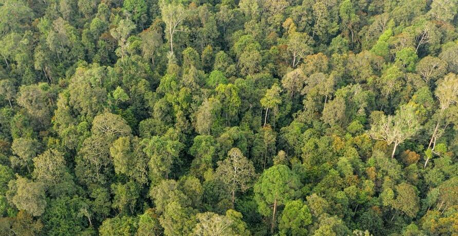 Prima fürs Klima – natürliche Klimalösungen