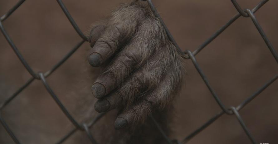 Tierquälerei in China