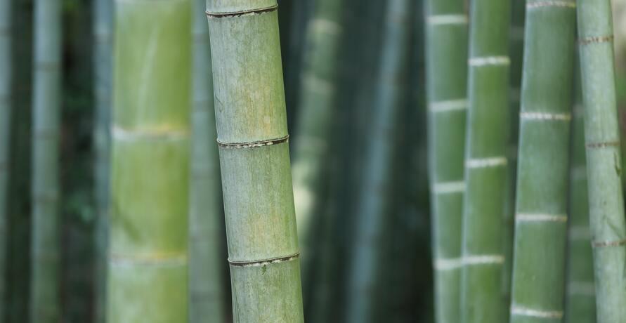 Bambus-Produkte - diese Alternativen sind plastikfrei und stylisch