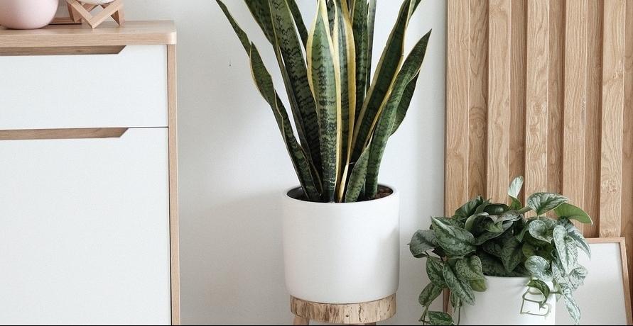 Hol dir Nachhaltigkeit in Wohn- und Schlafzimmer