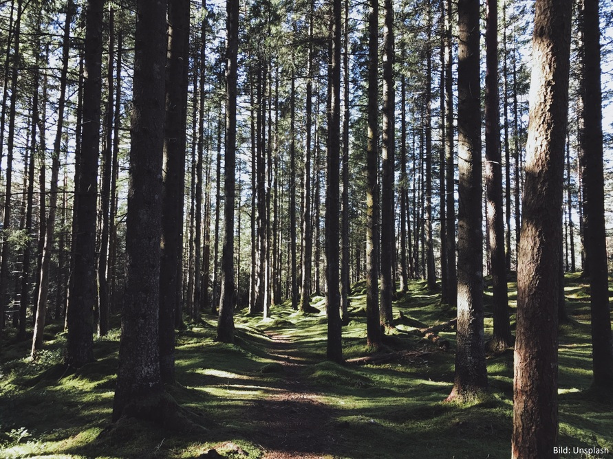 forest_trees