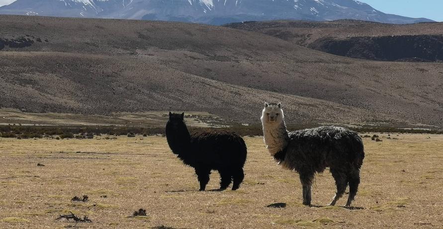 Kuschlig warm durch den Winter mit nachhaltiger Alpaka Mode von AlpacaOne