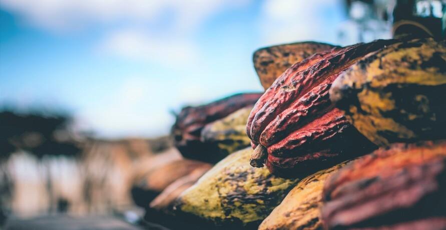 Karuna: Vegane fairtrade Schokolade aus Spezialitätenkakao