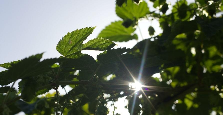 Nachhaltigkeitssiegel für nachhaltige Unternehmen