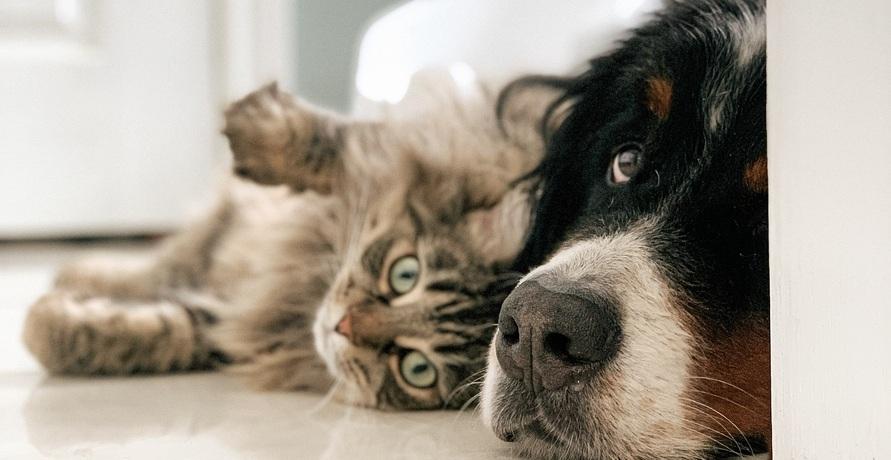 Yarrah erklärt: Warum Bio besser für Hund und Katze ist