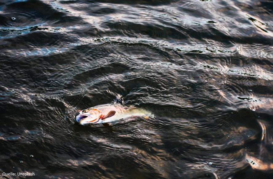fischkonsumsteigtweiter