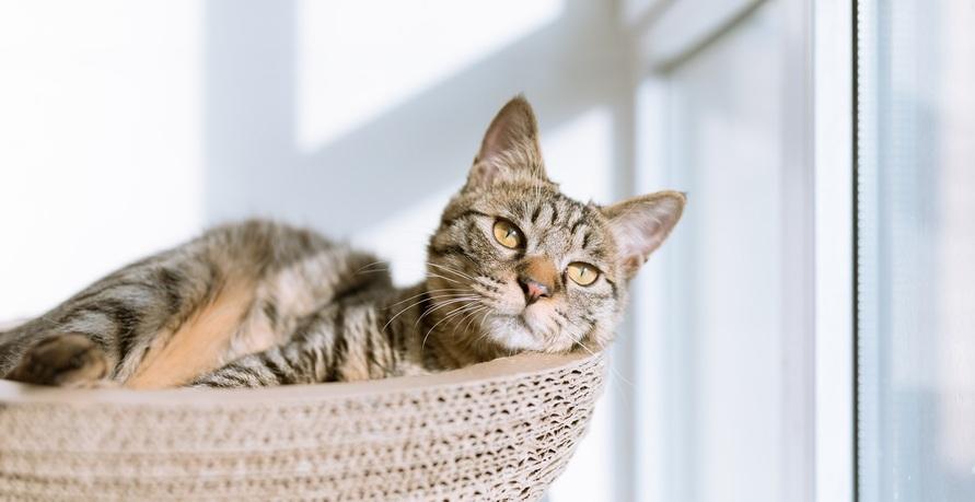 Alles für die Katz: Warum Bio Katzenfutter besser ist