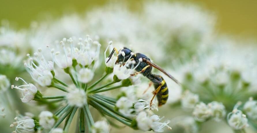 Bio-Wespenspray und Bio-Mückenspray für einen sorglosen Sommer