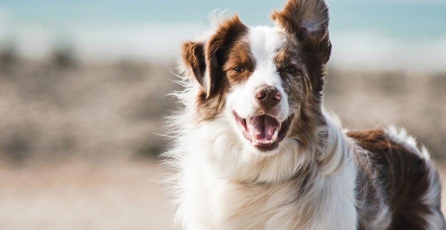 Vegetarische Ernährung für meinen Hund – Go or No?