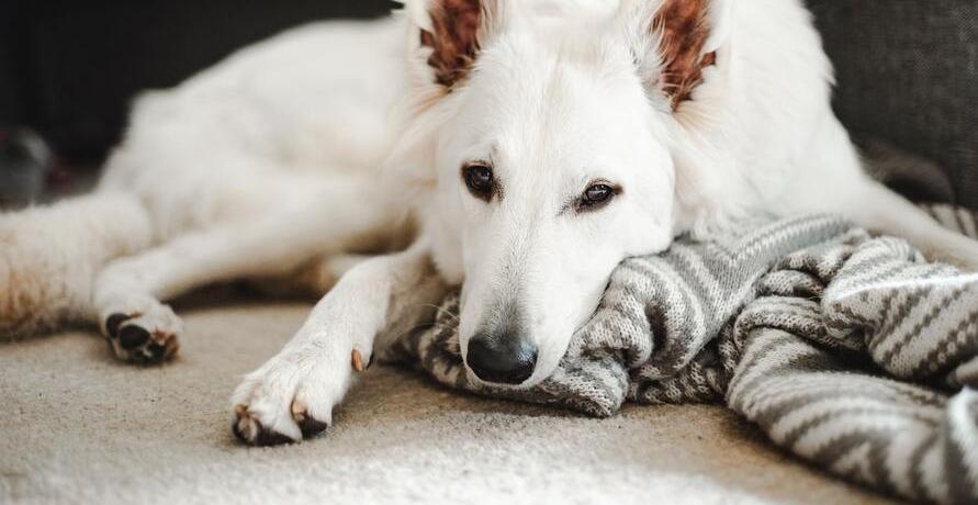 Welche Ernährung für den Hund? – Wir zeigen dir, was Goood ist