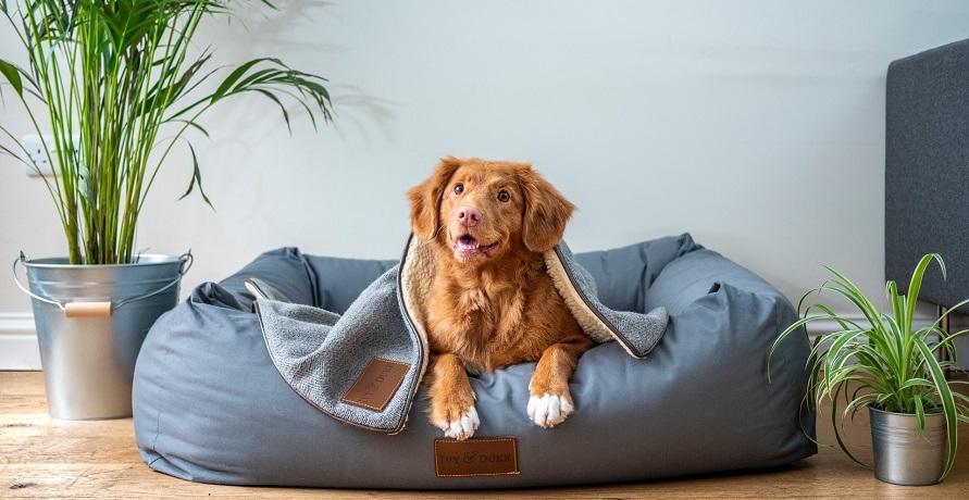 Nachhaltige Hundebetten für den gesunden Schlaf deines Vierbeiners