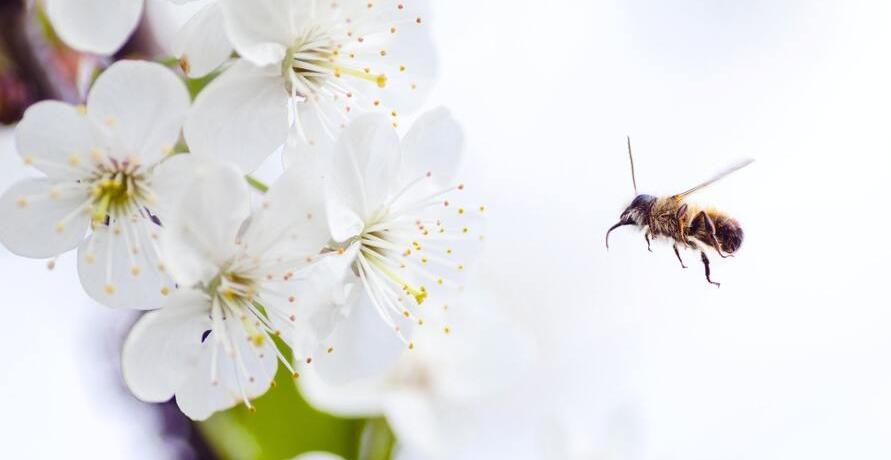 Biologische Vielfalt erleben, fördern und schützen - im Mini-Naturpark!
