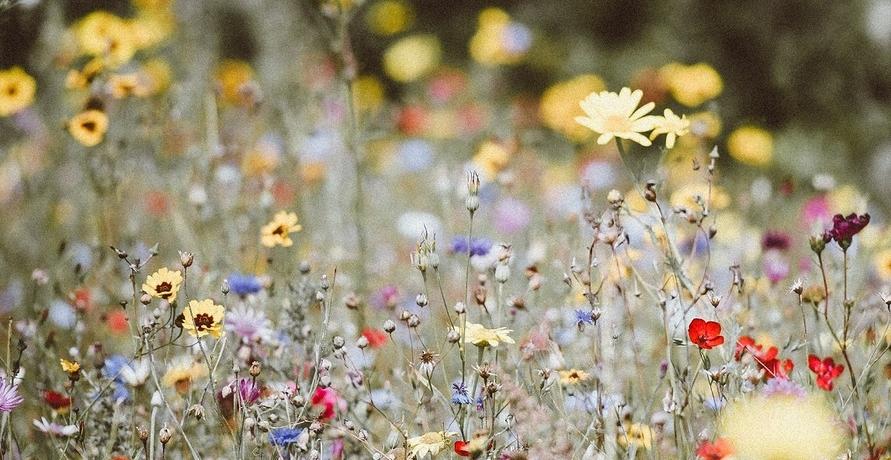 Bienenstrom schafft Blühflächen – für die Vielfalt von Pflanzen und Insekten